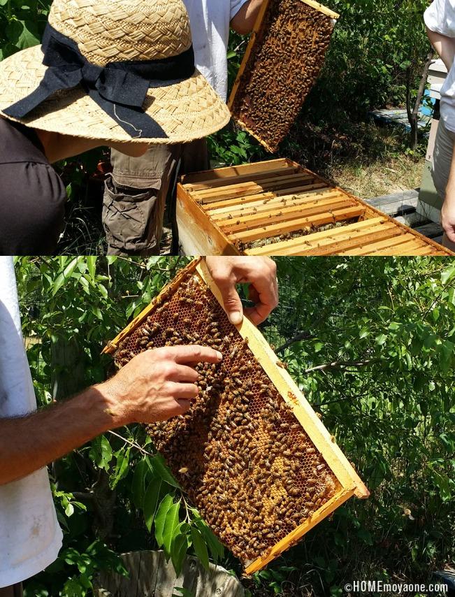 HOMEmoyaone_beekeepingClass