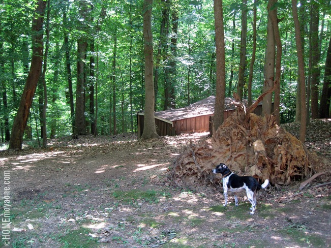 homemoyaone_shed-stump