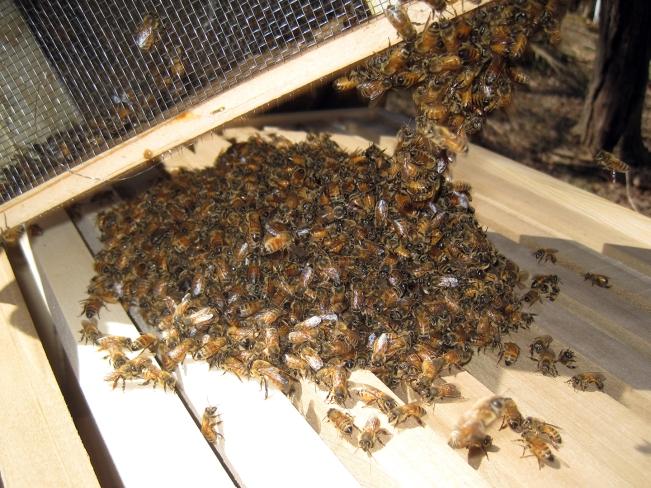 homemoyaone_bees