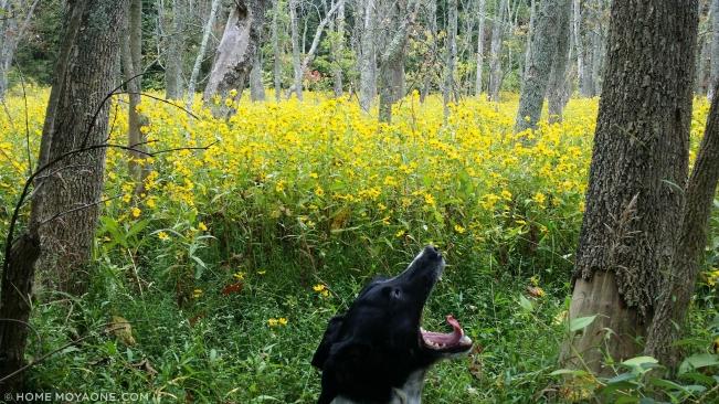 homemoyaone_broccoli-in-wildflowers